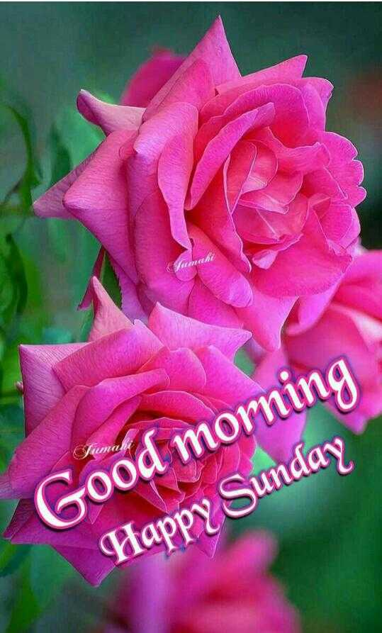 🌅 સુપ્રભાત 🙏 - GET Sumahi Good morning Happy Sunday - ShareChat