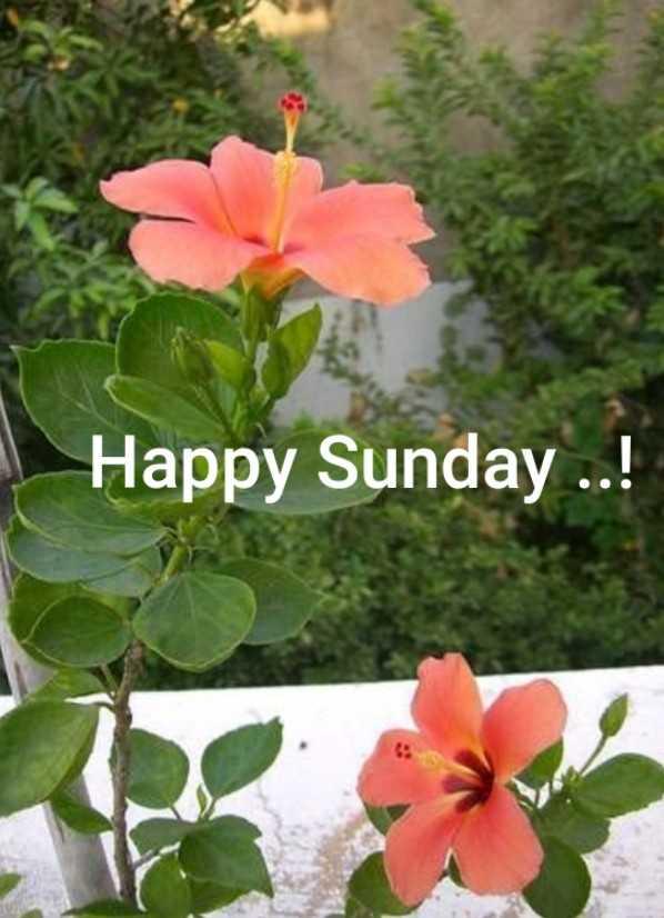 🌅 સુપ્રભાત 🙏 - Happy Sunday . . . ! - ShareChat