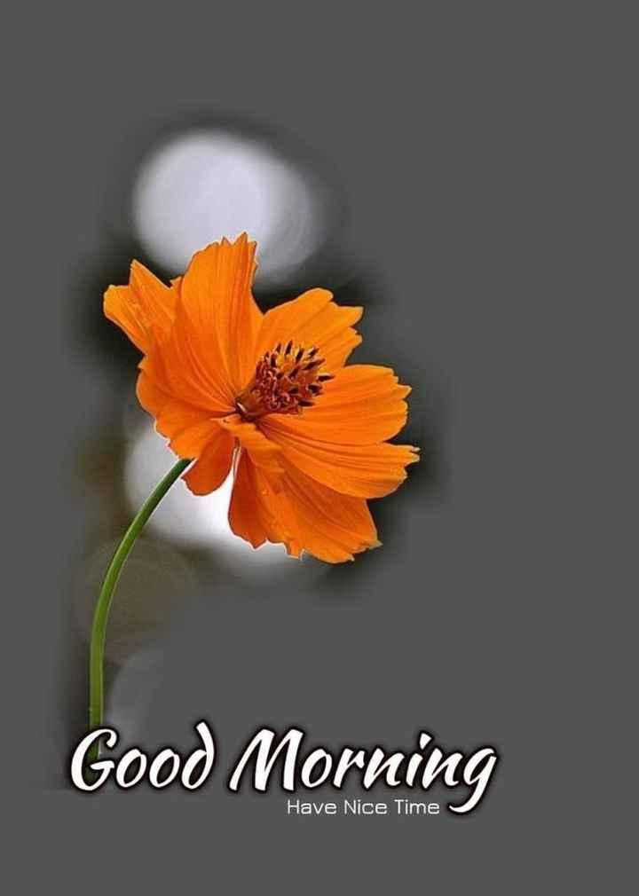 🌅 સુપ્રભાત 🙏 - Good Morning Have Nice Time - ShareChat