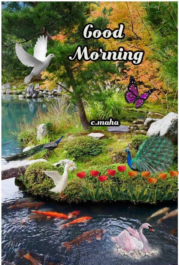 🌅 સુપ્રભાત 🙏 - Good Morning c . maha - ShareChat