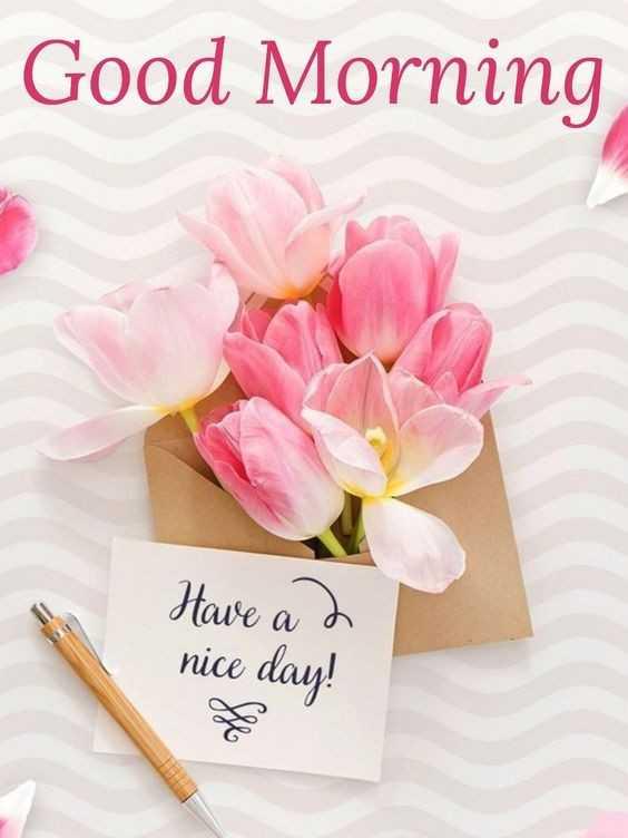 🌅 સુપ્રભાત 🙏 - Good Morning Have a 2 nice day ! - ShareChat