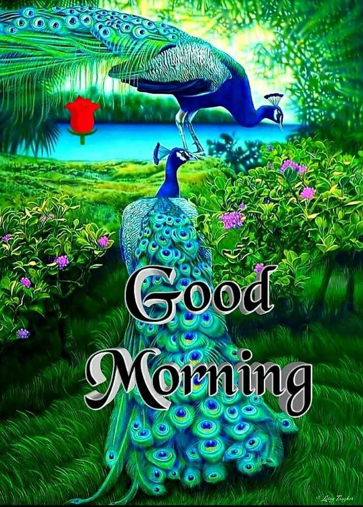 💐 હેપી રવિવાર - Good Morning Zug - ShareChat