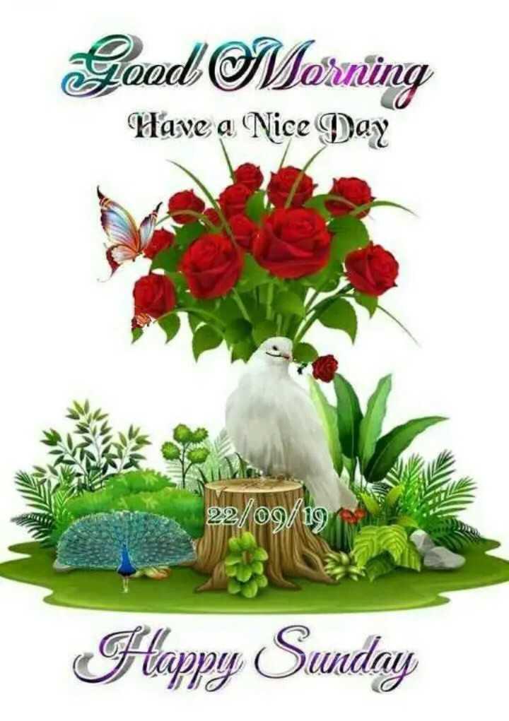 💐 હેપી રવિવાર - Good Mornung Have a Nice Day 22 / 09 / 19 Happy Sunday TO - ShareChat