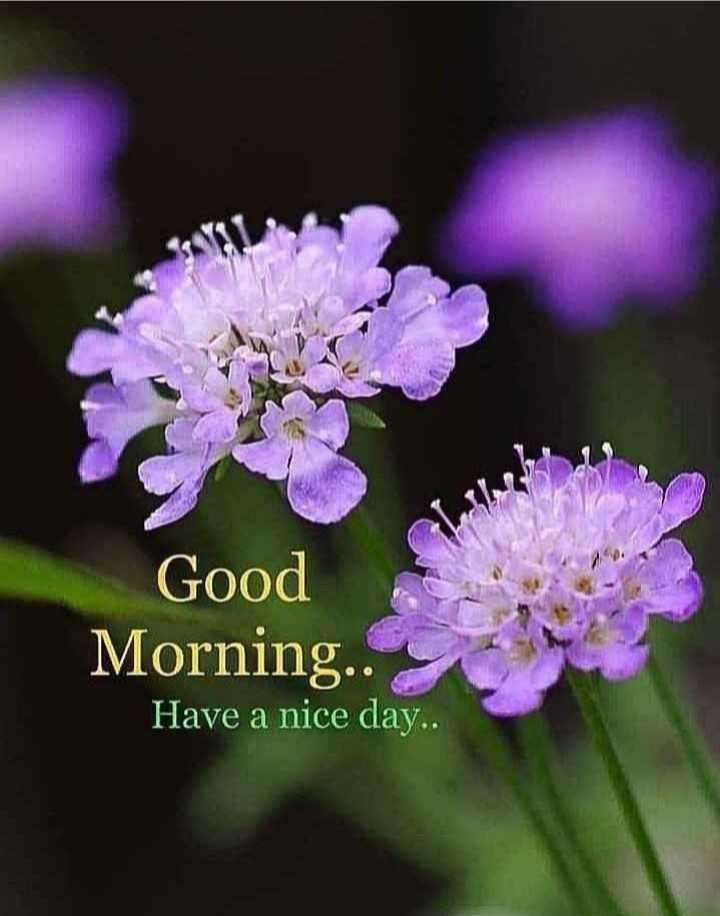 💐 હેપી રવિવાર - Good Morning . . Have a nice day . . - ShareChat