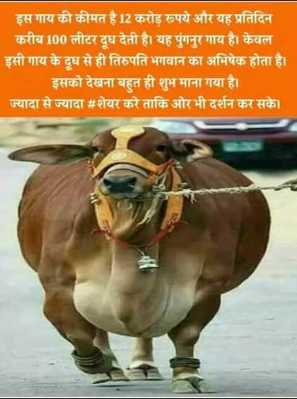 💐 હેપી રવિવાર - इस गाय की कीमत है 12 करोड़ रूपये और यह प्रतिदिन करीब 100 लीटर दूध देती है । यह मॅगनुर गाय है । केवल इसी गाय के दूध से ही तिरुपति भगवान का अभिषेक होता है । इसको देखना बहुत ही शुभ माना गया है । ज्यादा से ज्यादा # शेयर करे ताकि ओर भी दर्शन कर सके । - ShareChat