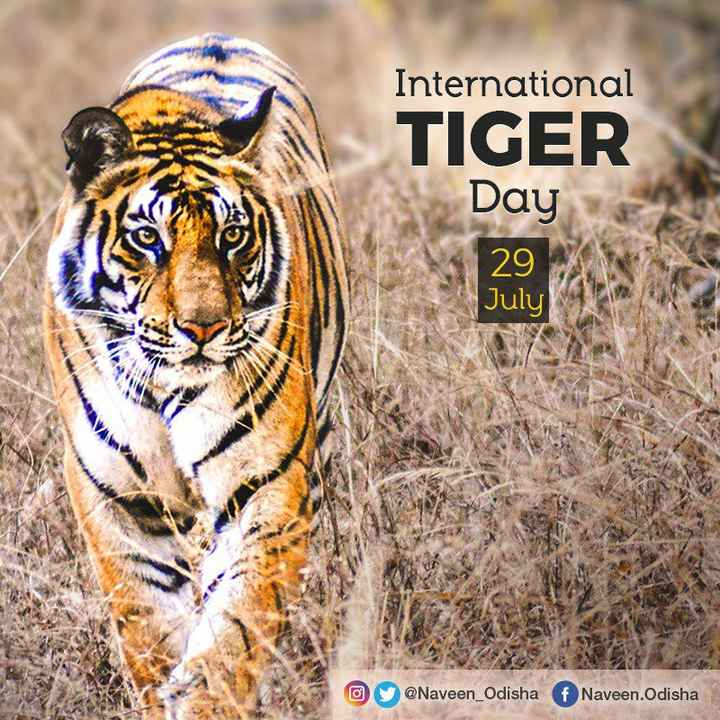 🐯ଅନ୍ତରାଷ୍ଟ୍ରୀୟ ବାଘ ଦିବସ - International TIGER Day 29 July @ @ Naveen _ Odisha f Naveen . Odisha - ShareChat