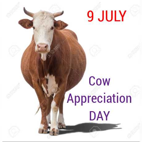 🐮ଗାଈ ଦିବସ - 9 JULY 123RF Cow Appreciation DAY - ShareChat