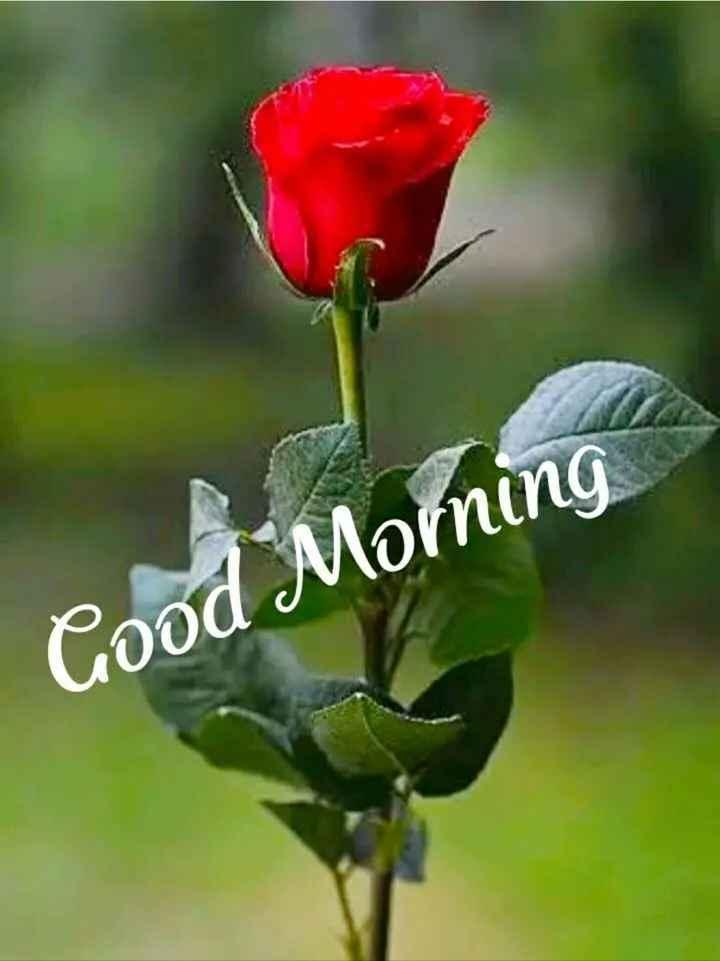 📜ଗୁଡ଼ ମର୍ଣ୍ଣିଙ୍ଗ ଶାୟରୀ - Good Morning - ShareChat
