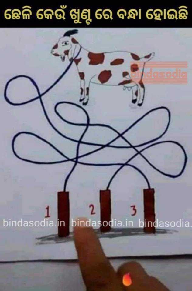 ଚନ୍ଦ୍ର ଗ୍ରହଣ - | ଛେଳି କେଉଁ ଖୁଣ୍ଟ ରେ ବନ୍ଧା ହୋଇଛି asodio 1 2 3 bindasodia . in bindasodia . in bindasodia . - ShareChat