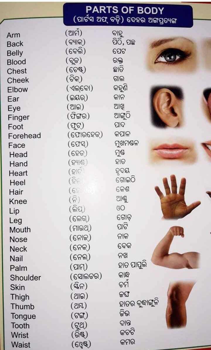 🤔ଜଣା ଅଜଣା - Arm Back Belly Blood Chest Cheek Elbow Ear Eye Finger Foot Forehead Face Head Hand Heart Heel Hair Knee PARTS OF BODY ' ( ପାଟସ ଅଫ୍ ବଡ଼ି ) ଦେହର ଅଙ୍ଗପ୍ରତ୍ୟଙ୍ଗ । ( ଆର୍ମ ) ବାହୁ ( ବ୍ୟାକ ) ପିଠି , ପଛ ( ବେଲି ) ପେଟ ( ବ୍ଲଡ ) ରକ୍ତ ( ଚେଷ୍ଟ ) ଛାତି ( ଚିକ ) ଗାଲ । ( ଏଲକୋ ) , କହୁଣି ( ଇୟର ) କାନ ( ଆଇ ) । ଆଖୁ ( ଫିଙ୍ଗର ) , ଆଙ୍ଗୁଠି ( ଫୁଟ୍ ) ( ଫୋରହେଡ଼ ) କପାଳ ( ଫେସ୍ ) ମୁଖମଣ୍ଡଳ ( ହେଡ୍ ) ( ହ୍ୟାଣ୍ଡ ) ହାତ ( ହାଟା ହୃଦୟ ପାଦ ଗୋଇଠି କେଶ ଆଣ୍ଠୁ Lip ଓO ଗୋଡ଼ ପାଟି Leg Mouth Nose Neck Nail Palm Shoulder Skin Thigh Thumb Tongue Tooth Wrist Waist ( ଲିପୁ ) ( ଲେଗ ) ( ମାଉଥ ) ( ନୋଜ ) ( ନେକ ) ( ନେଲ ) ( ପାମ୍ ) ( ସୋଲଡର ) ( ସ୍କନ ) ( ଥାଇ ) ( ଥିମ୍ ) ( ଟଙ୍ଗ ) ( ଟୁଥ ) ( ରିଷ୍ଟ ) ( ୱେଷ୍ଟ ) ନାକ ବେକ ନଖା ହାତ ପାପୁଲି କାନ୍ଧ ଚର୍ମ ଜଙ୍ଘ ହାତର ବୃଦ୍ଧାଙ୍ଗୁଳି ଜିଭ ଦାନ୍ତ କଚଟି କମର - ShareChat