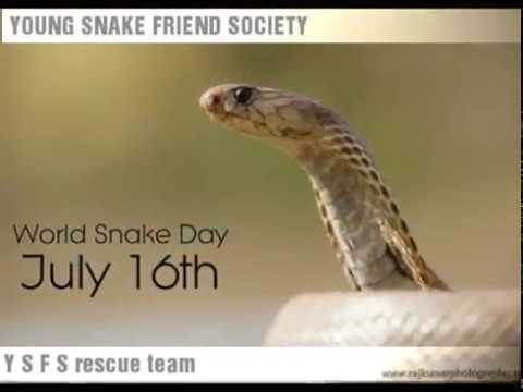 🐍ବିଶ୍ୱ ସାପ ଦିବସ - YOUNG SNAKE FRIEND SOCIETY World Snake Day July 16th Y SFS rescue team - ShareChat