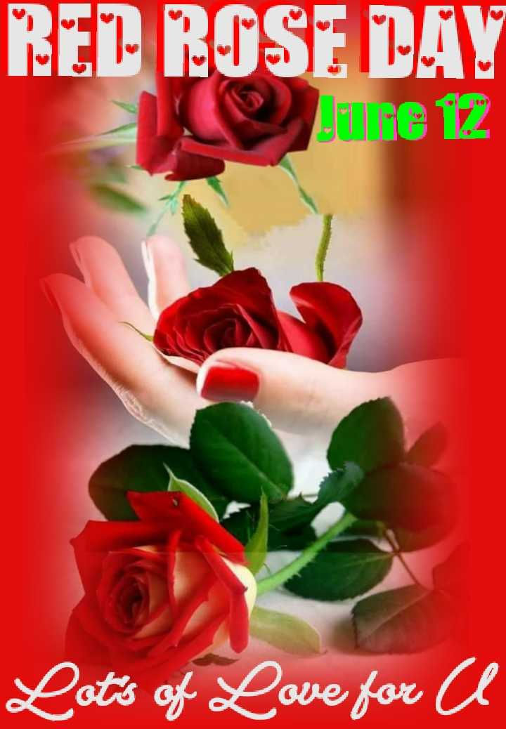 🌹ଲାଲ ଗୋଲାପ ଦିବସ - RED ROSE BAY June 12 Lot ' s of Love for a - ShareChat