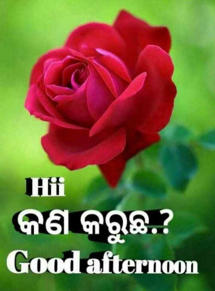 🌇ଶୁଭ ଅପରାହ୍ନ - Hii କଣ କରୁଛ ? Good afternoon - ShareChat