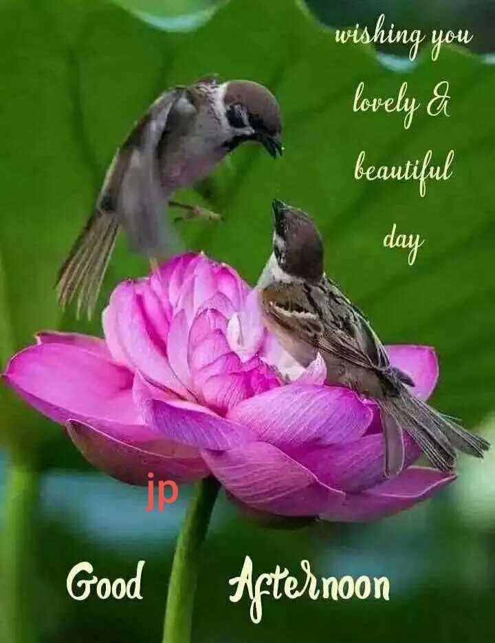 🌇ଶୁଭ ଅପରାହ୍ନ - wishing you lovely a beautiful Good Afternoon - ShareChat