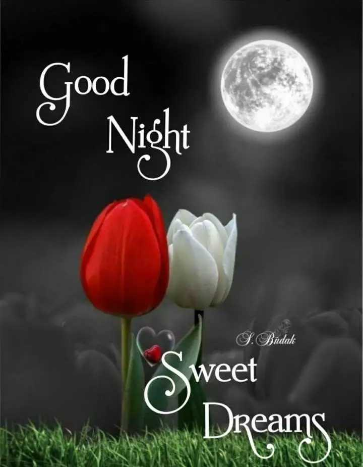 🌛ଶୁଭରାତ୍ରୀ - Good Night S . Budak Sweet Dreams - ShareChat