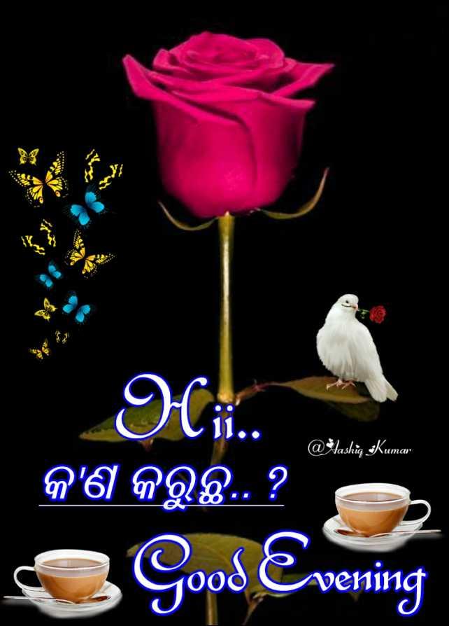 💐ଶୁଭେଚ୍ଛା - @ Aashiq : Kumar କ ' ଣ କରୁଛି . . ? Good Evening - ShareChat