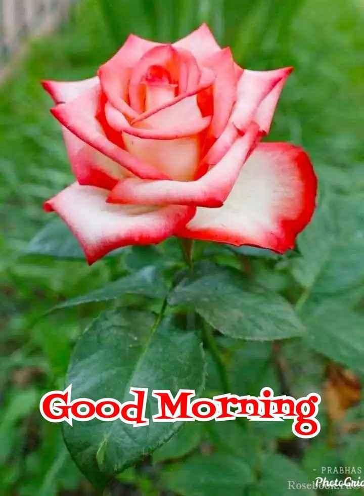 💐ଶୁଭେଚ୍ଛା - Good Morning - PRABHAS Rose PhotoGria - ShareChat