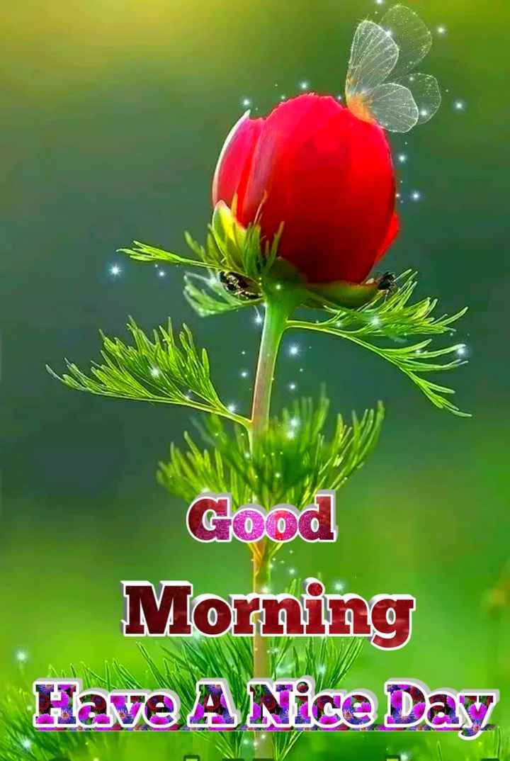 💐ଶୁଭେଚ୍ଛା - Il Good Morning Have A Nice Day - ShareChat
