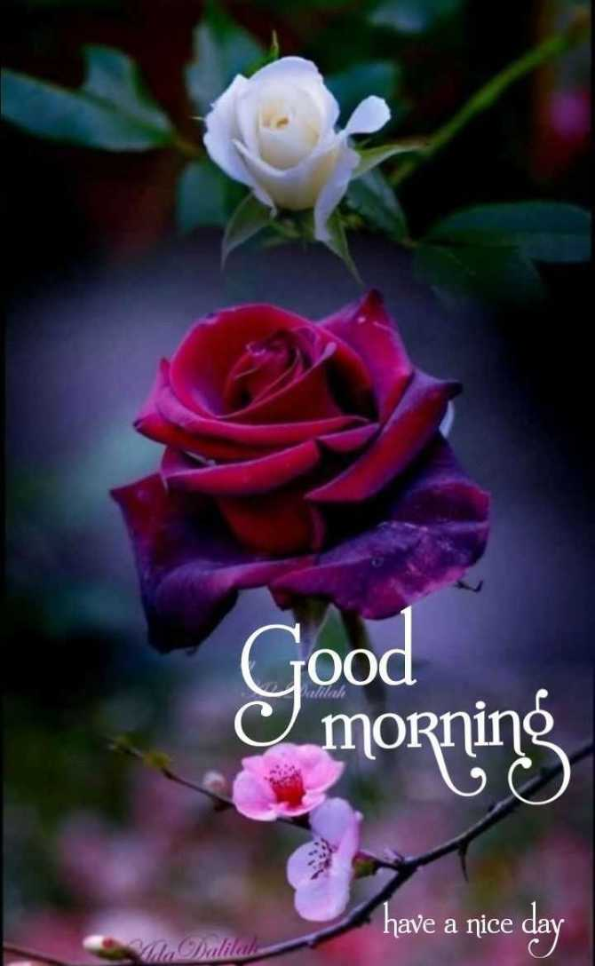 💐ଶୁଭେଚ୍ଛା - Good morning have a nice day Mia Dalilah - ShareChat