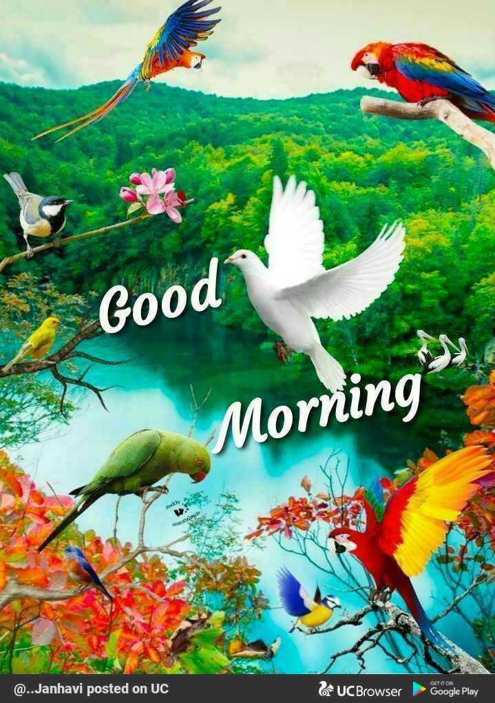 🌞ସୁପ୍ରଭାତ - Good Morning GET IT ON @ . . Janhavi posted on UC UC Browser Google Play - ShareChat