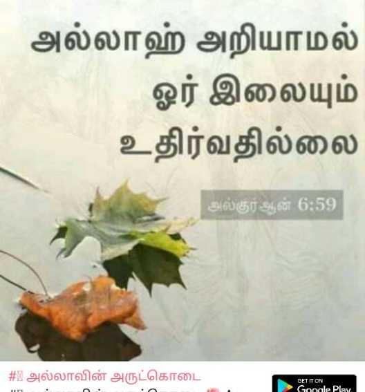 🕍 அல்லாவின் அருட்கொடை - அல்லாஹ் அறியாமல் ஓர் இலையும் உதிர்வதில்லை அல்குர் ஆன் 6 : 59 # 1 அல்லாவின் அருட்கொடை GET IT ON Gopale Play - ShareChat