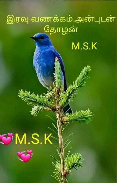 🌙இரவு வணக்கம் - ' இரவு வணக்கம் . அன்புடன் தோழன் M . S . K * * M . S . K - ShareChat