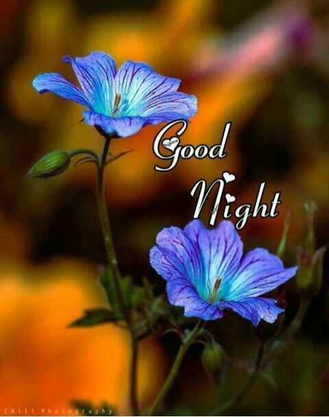 🌙இரவு வணக்கம் - Good Night CNP - ShareChat