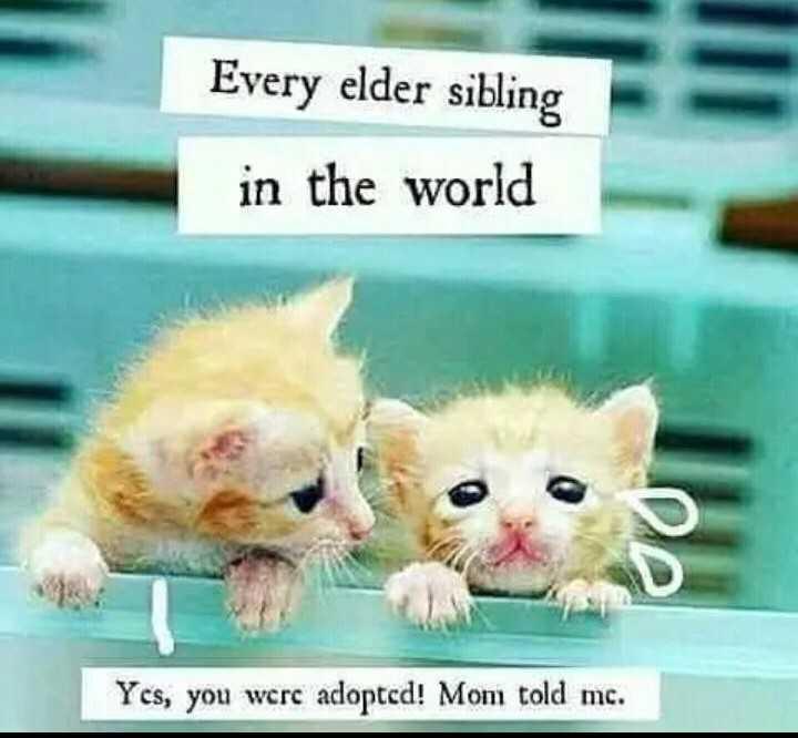 👬உடன்பிறந்தோர் தினம் - Every elder sibling in the world Yes , you were adopted ! Mom told mc . - ShareChat