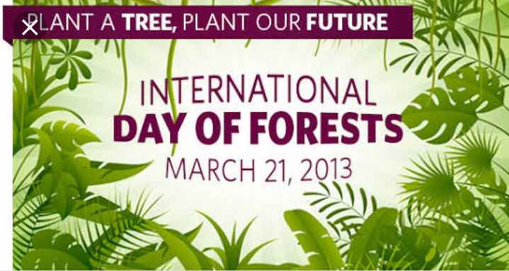 உலக காடுகள் தினம்🌳 - BLANT A TREE , PLANT OUR FUTURE INTERNATIONAL DAY OF FORESTS MARCH 21 , 2013 - ShareChat