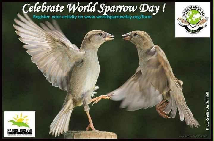 உலக சிட்டு குருவி தினம் - Celebrate World Sparrow Day ! Celebrate Wont Sparow Dey ! GROW Register your activity on www . worldsparrowday . org / form Photo Credit - Urs Schmidli NATURE FOREVER www . schmidi - fotoart . ch - ShareChat