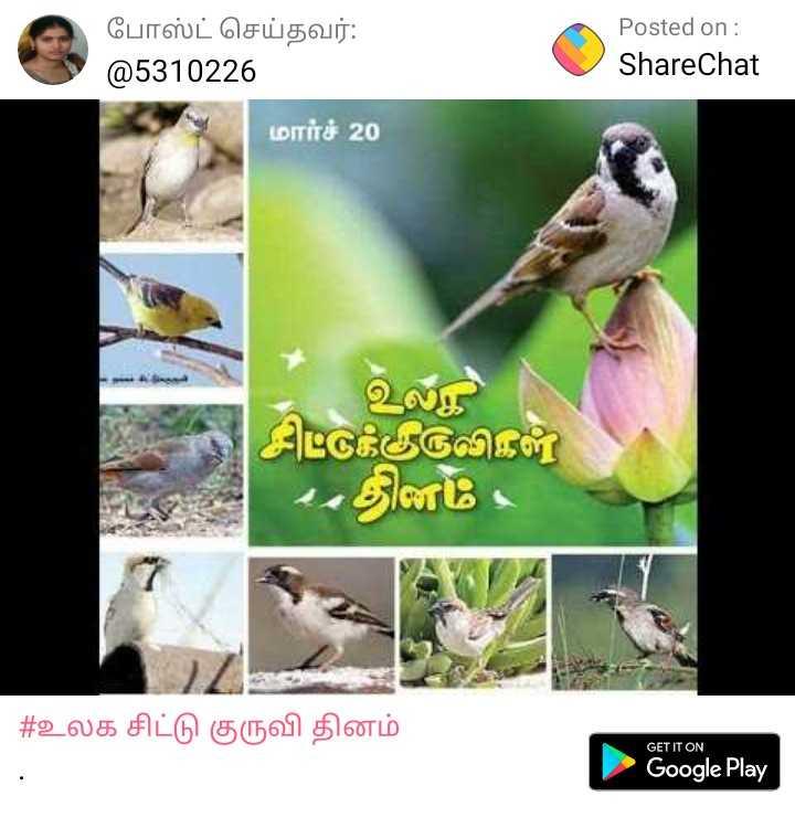 உலக சிட்டு குருவி தினம் - போஸ்ட் செய்தவர் : @ 5310226 Posted on : ShareChat மார்ச் 20 உலா சிட்டுக்குருவிகள் 4 . தினம்   # உலக சிட்டு குருவி தினம் GET IT ON Google Play - ShareChat