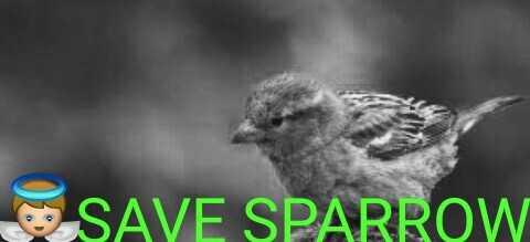 உலக சிட்டு குருவி தினம் - SAVE SPARROW - ShareChat