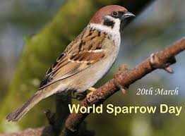 உலக சிட்டு குருவி தினம் - 20th March World Sparrow Day - ShareChat