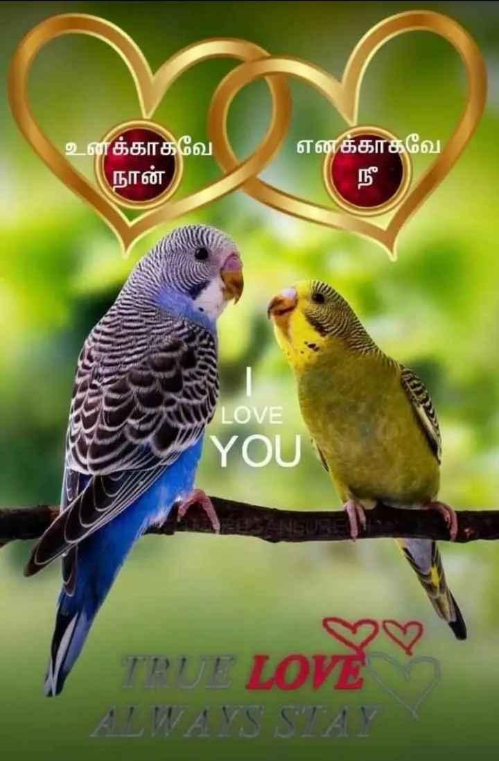 💑 காதல் ஜோடி - எனக்காகவே உனக்காகவே நான் , LOVE YOU 1772 171 10 / ) ALWAYS STAY - ShareChat
