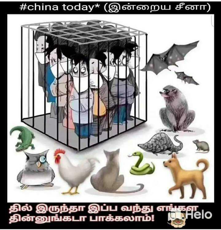 🤣காமெடி ஸ்டேட்டஸ் - # china today * ( இன்றைய சீனா ) தில் இருந்தா இப்ப வந்து எங்கள தின்னுங்கடா பாக்கலாம் ! D IHero - ShareChat