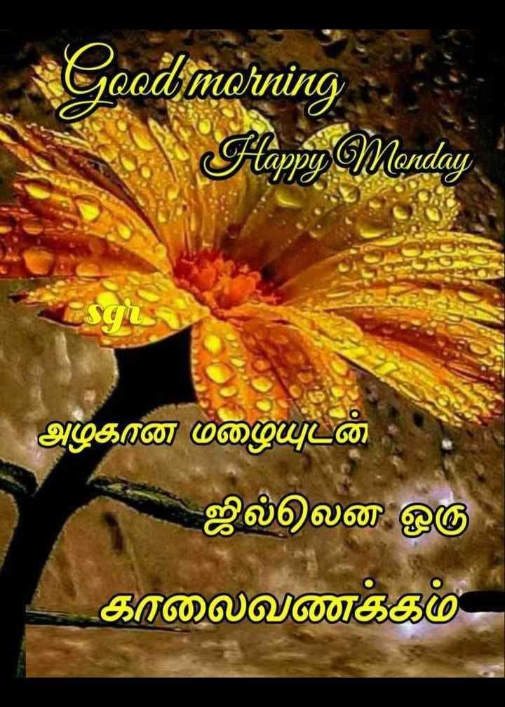 🌞காலை வணக்கம் - Good morning Flappy Monday அழகான மழையுடன் ஜில்லென ஒரு காலைவணக்கம் - ShareChat