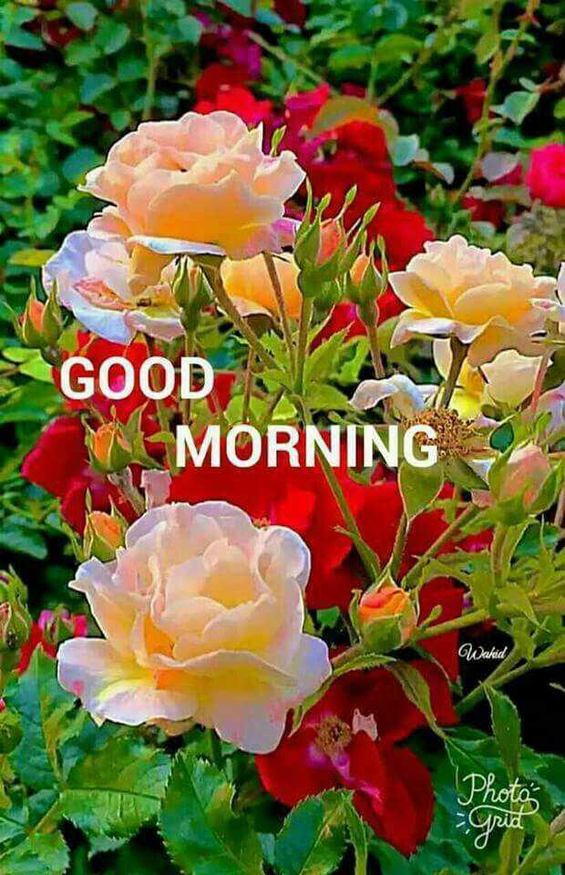 🌞காலை வணக்கம் - GOOD NA MORNING Walid Photo Grid - ShareChat