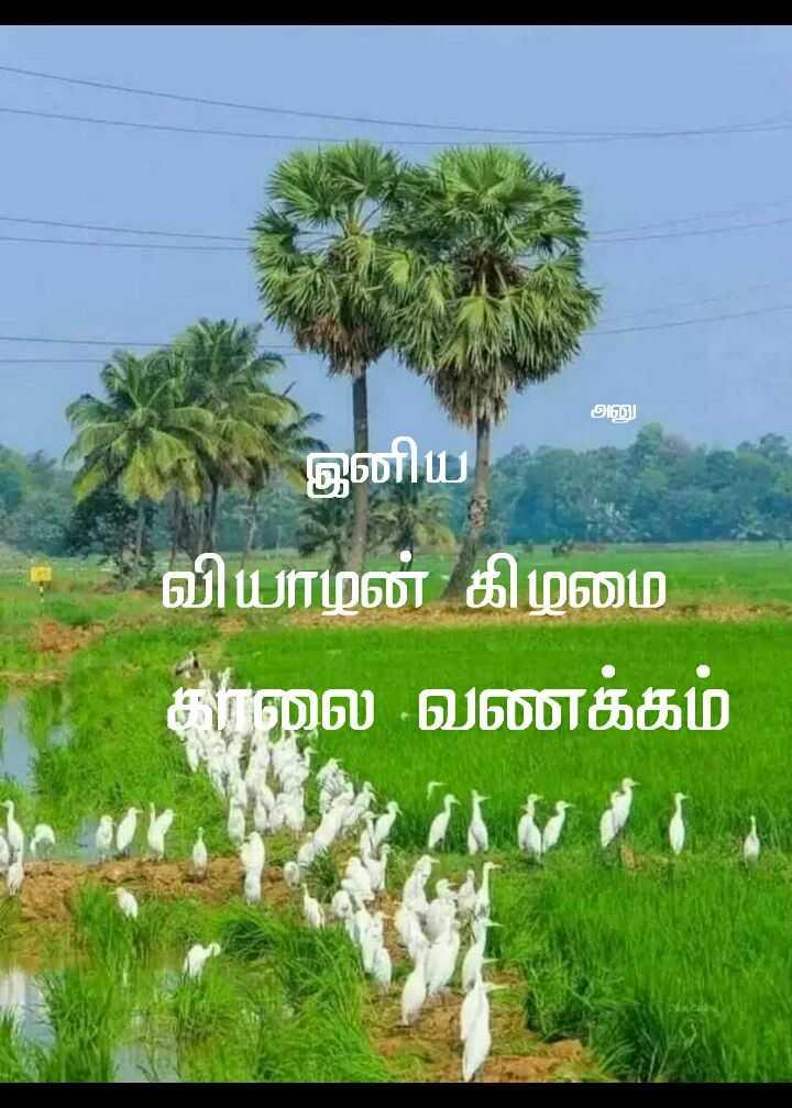 🌞காலை வணக்கம் - அனு இனிய வியாழன் கிழமை காலை வணக்கம் - ShareChat