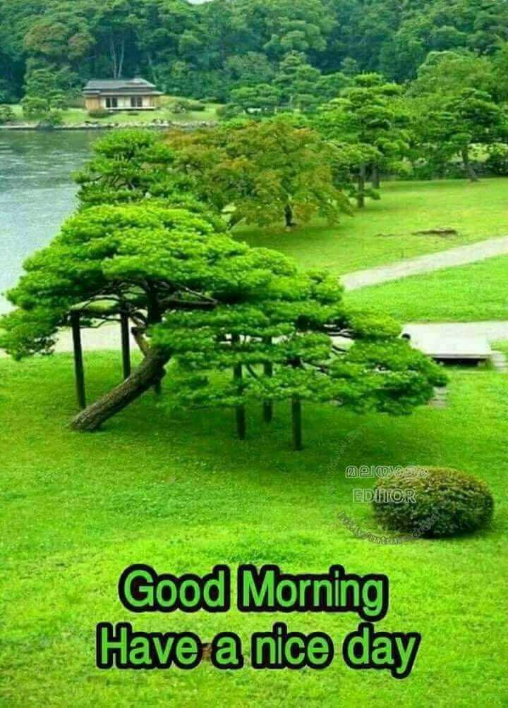 🌞காலை வணக்கம் - മൂല്യത്തിൽ EDITOR 02 Good Morning Have a nice day - ShareChat