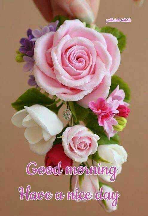 🌞காலை வணக்கம் - pullattalittaladet Good morning Have a nice day - ShareChat