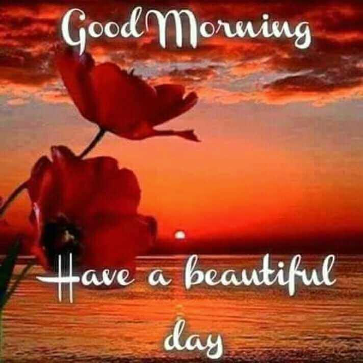🌞காலை வணக்கம் - Good Morning Have a beautiful day - ShareChat