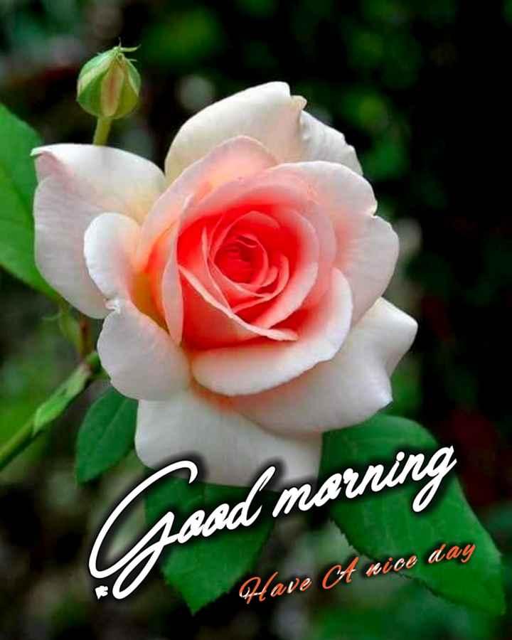 🌞காலை வணக்கம் - sad marning Have A nice day - ShareChat