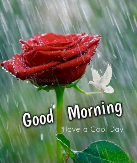 🌞காலை வணக்கம் - ASHOK NAN Good Morning Have a Cool Day - ShareChat