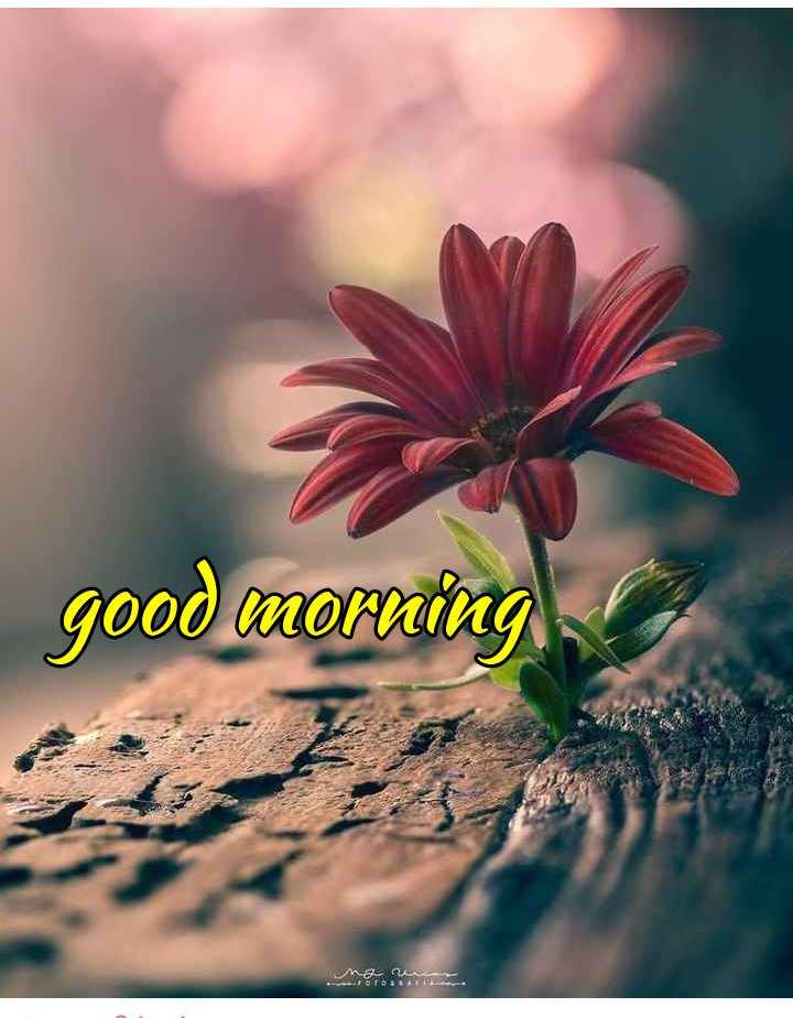 🌞காலை வணக்கம் - good morning ST . - ShareChat