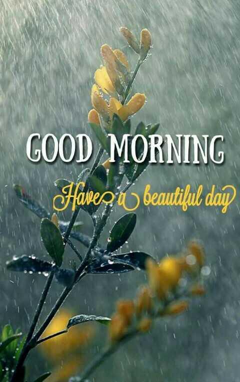 🌞காலை வணக்கம் - GOOD MORNING avez beautiful day - ShareChat