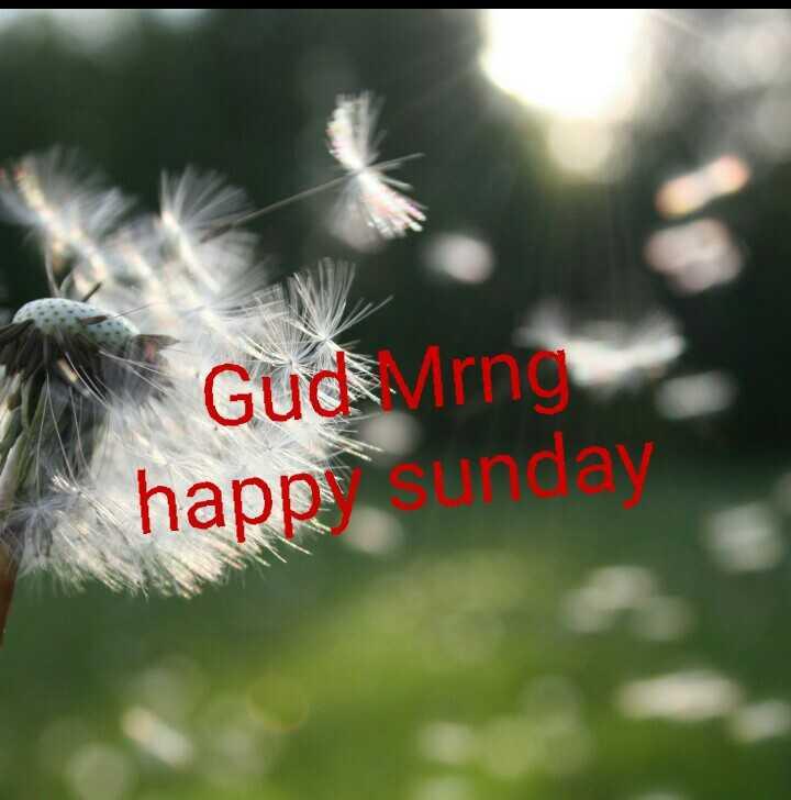 🌞காலை வணக்கம் - Guderng happysunday - ShareChat