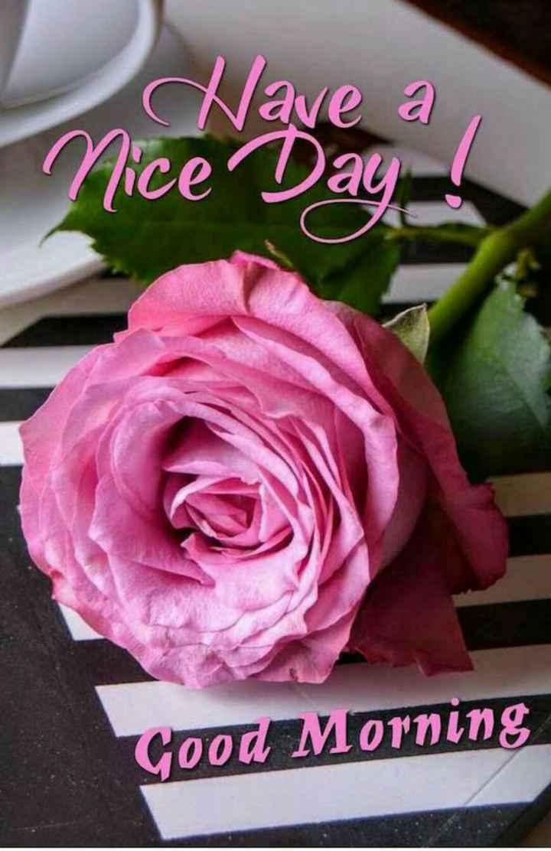 🌞காலை வணக்கம் - Have a Nice Day ! Good Morning - ShareChat