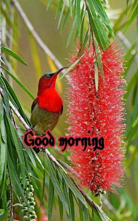 🌞காலை வணக்கம் - MA Good morning - ShareChat