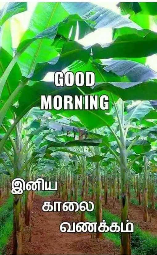 🌞காலை வணக்கம் - « GOOD MORNING இனிய காலை வணக்கம் - ShareChat