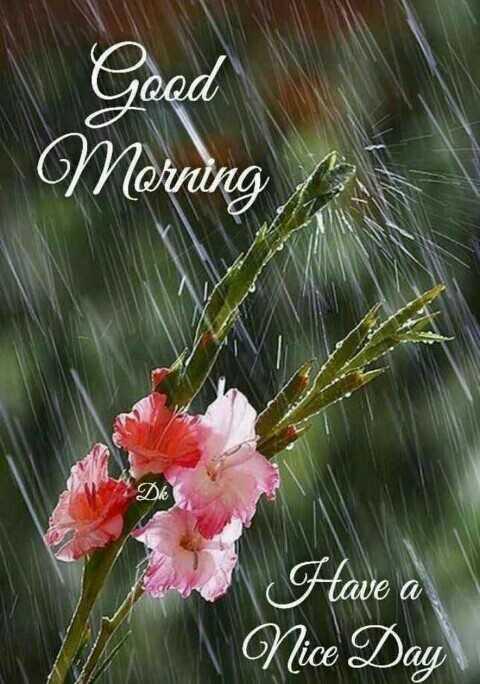 🌞காலை வணக்கம் - Good Morning Have a Nice Day - ShareChat